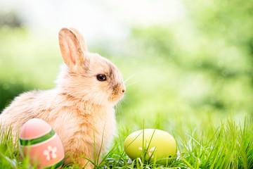 süße Osterkarte