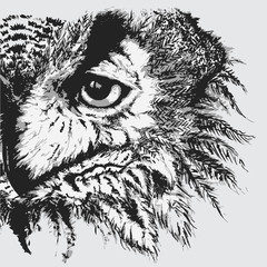 Monochrome black and white owl ink line art sketch vector