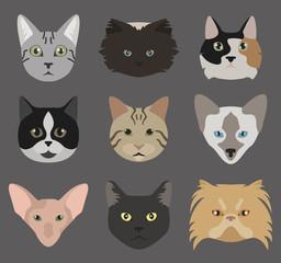 Cat breeds icon set flat style