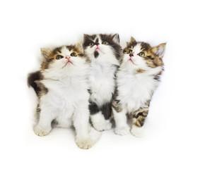 cats  kitten pets domestic
