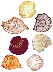 stylized colorful seashells on a white background
