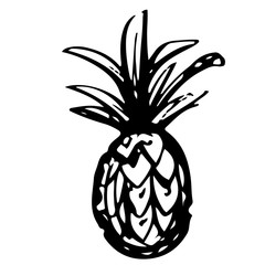 Pineapple sketch hand drawn isolated