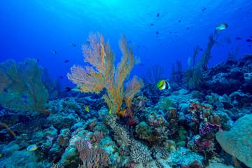 Coral Paradise