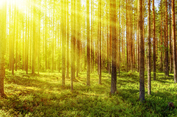 Morning forest in a sunny summer day.