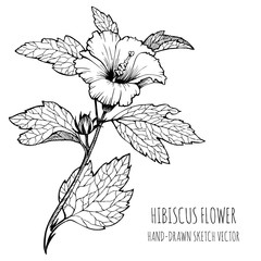 Hibiscus, tropical flower. Monochrome Vector sketch, hand-drawn. Adult coloring