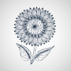 Sunflower Vector hand drawn