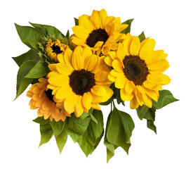 Bouquet of shiny yellow sunflowers with green leaves, on white