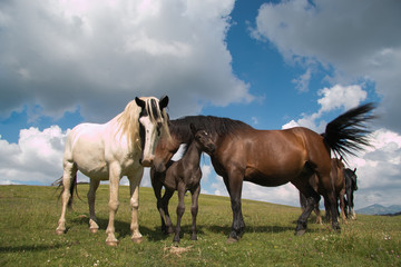 Portrait of happy horses family