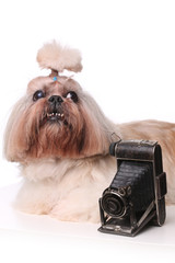 Shih Tzu dog near the old camera in studio