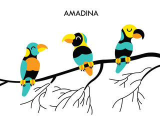 Amadina african birds 1