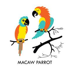 Parrot african birds 1