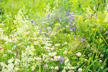 Wild flowers at summer.