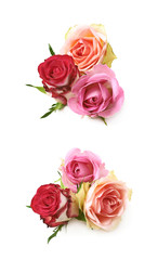 Rose buds composition isolated