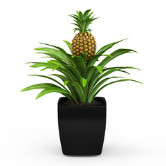 Fresh tropical pineapple bush in a pot isolated on white background. 3D Rendering, 3D Illustration.