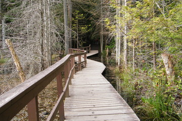 Boardwalk Through a Swampy Forest