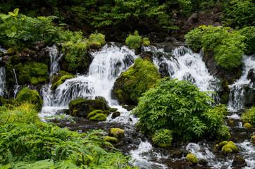 北海道京極町の羊蹄山の伏流水の湧き出し