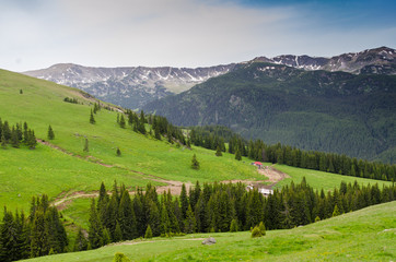 Summer in in the carpathian mountains near Transalpina road