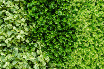 Artificial plant background
