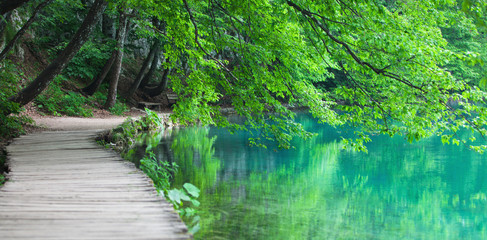 Wall Mural - Lake coast in national Croatian nature park Plitvice Lakes with tree branches, bench and wooden walkway