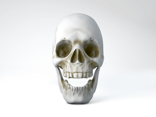3D illustration of skull on white background
