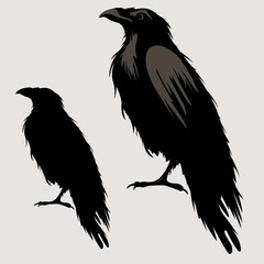 black raven bird silhouette