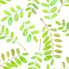 Seamless pattern with green watercolor acacia tree branches, hand drawn isolated on a white background