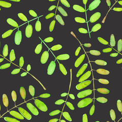 Seamless pattern with watercolor acacia tree branches, hand drawn isolated on a dark background