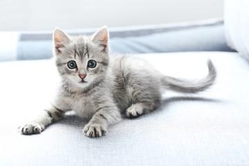 Fototapeta Beautiful little cat on a grey sofa obraz