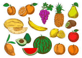 Freshly harvested ripe fruits sketch icons