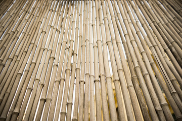 Bamboo trunk background.