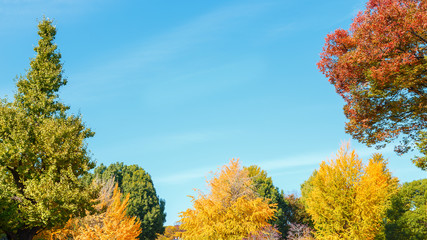 Trees with blue Sky Background in Autumn