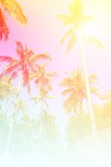 Coconut plam tree and blue sky