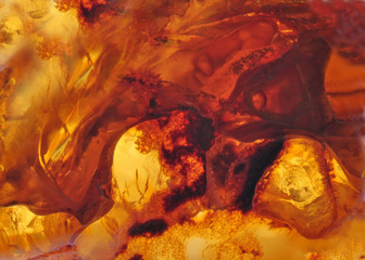 Baltic amber, resin segments, fossil millions of years