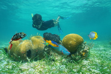 Man snorkeling underwater looking coral with tropical fish, Caribbean sea