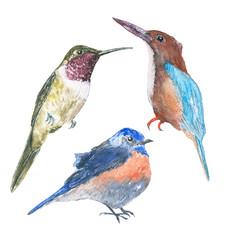 set birds. Watercolor painting, wildlife