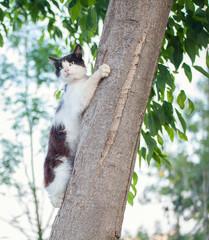 playful cat climbing tree