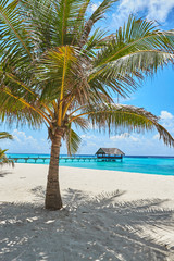 Recess Fitting Caribbean Palms and mangrove trees on Maldives