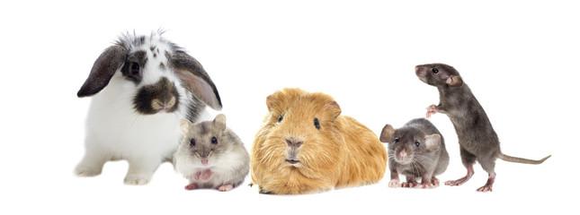 rodents set