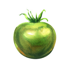 one fresh green tomato isolated, watercolor illustration on white