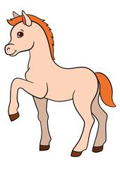 Cartoon farm animals. Little cute foal.