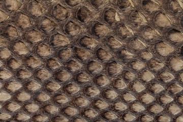 Genuine snakeskin. Leather texture background. Closeup photo.