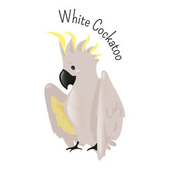 Exotic white cockatoo. Bird isolated