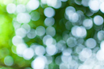 Abstract nature green bokeh from tree background,for background