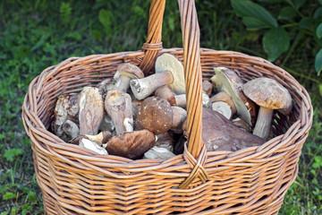 Basket of edible mushrooms