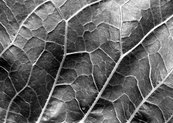 Abstract black and white leaf texture.