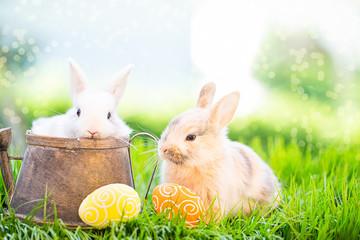 süße Osterkarte mit Hasenbabys