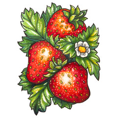 Three ripe strawberry and flower on a background of green leaves, is drawn marker.