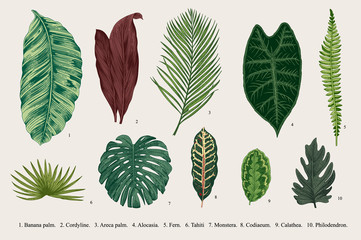 Set Leaf. Exotics. Vintage vector botanical illustration. Colorful.
