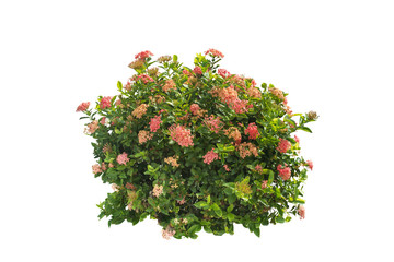 bush and flower isolated