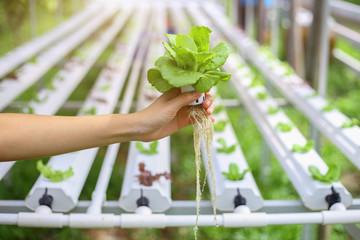 Hydroponics method of growing plants using mineral nutrient solu